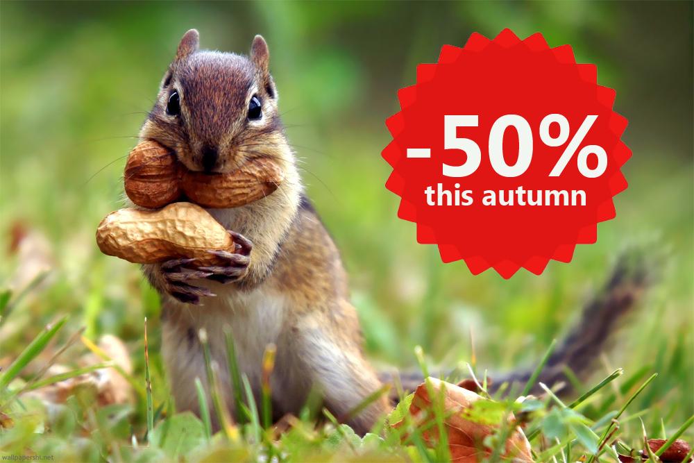 squirrel_en
